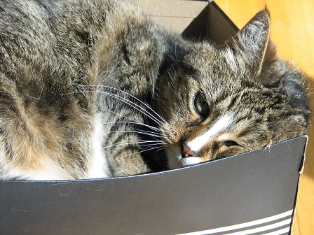A cat appears to rest comfortably in a small cardboard box