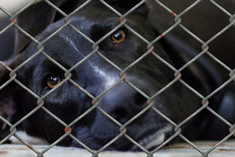 Sad-looking dog in a shelter cage